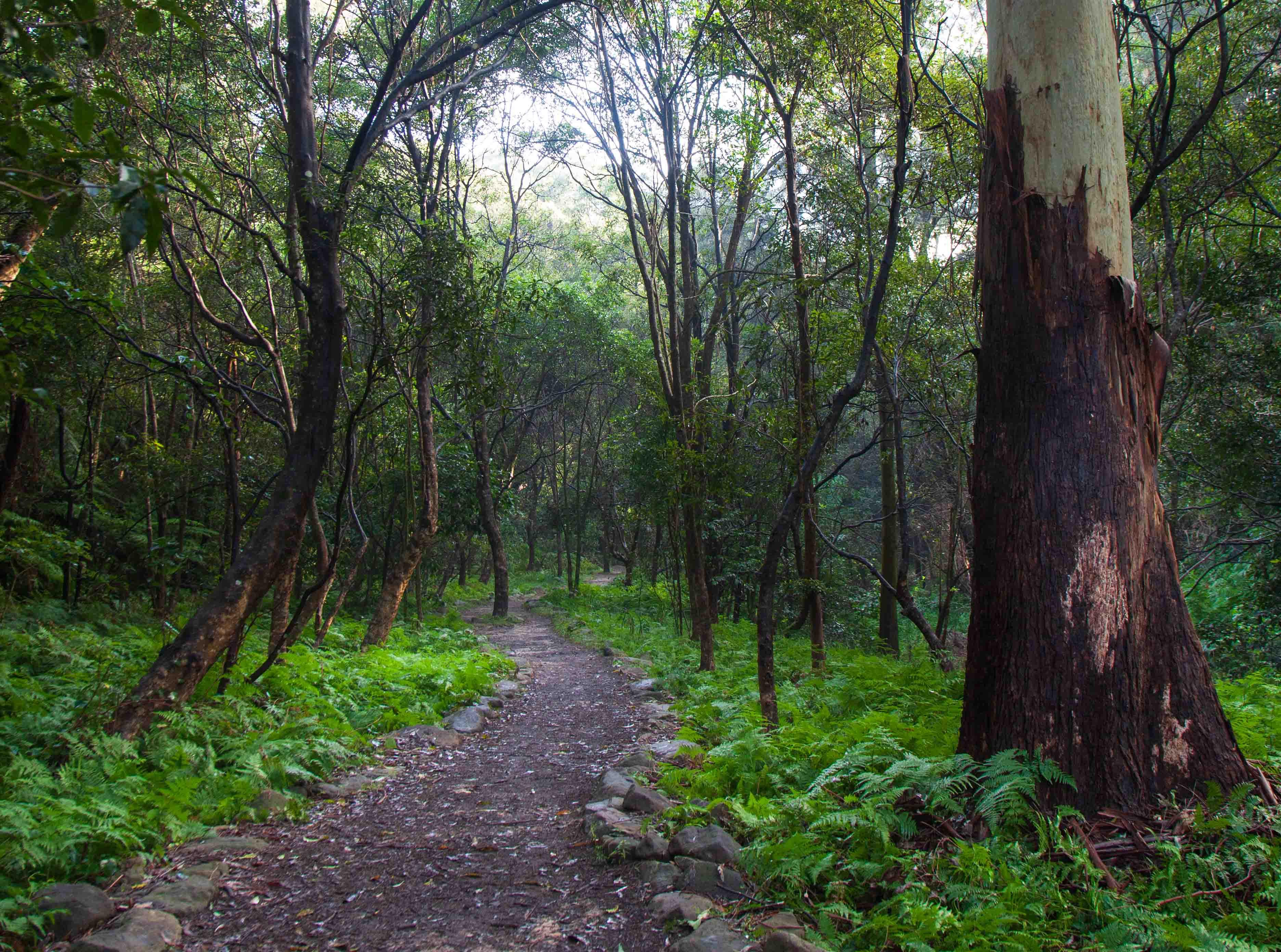 Shinrin-yoku Walk