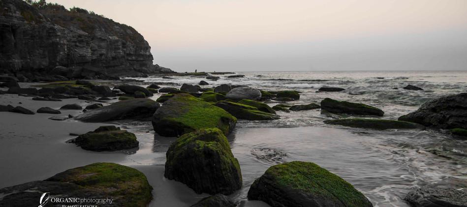 Sea Zen Garden - Turimetta Beach