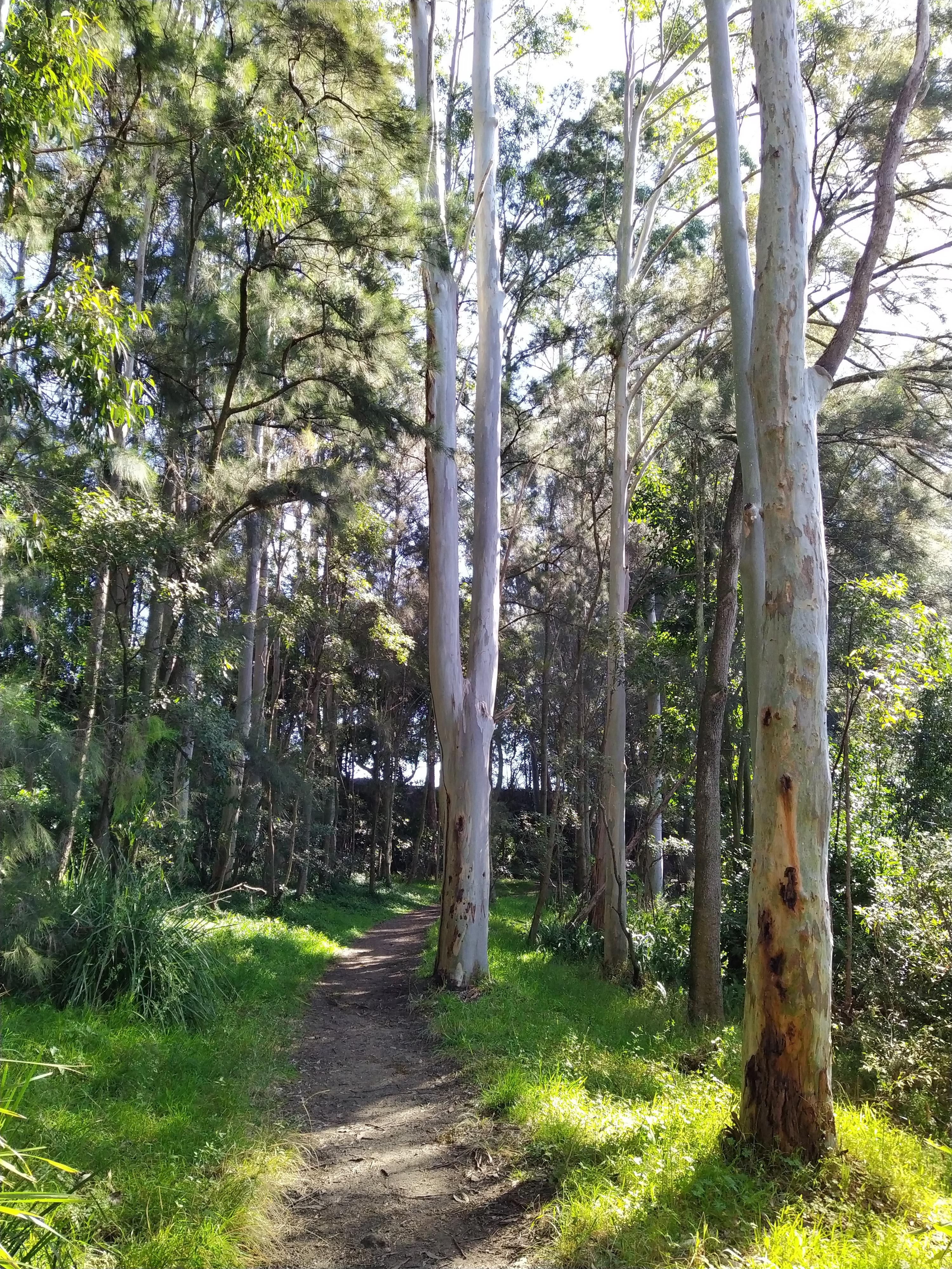 Shinrin-yoku Walk (Guided in Japanese)