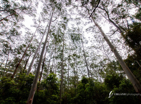 Shinrin-Yoku (Forest-bathing)  Location 2 – Cumberland State Forest