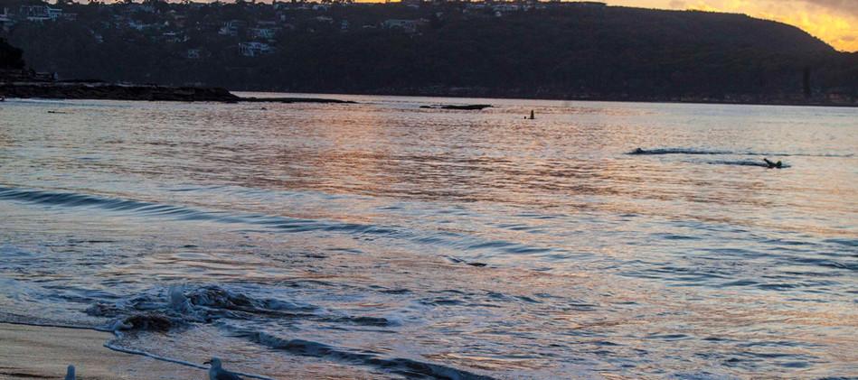 Seagull's morning bathing