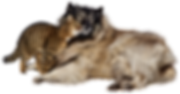 dog-and-cat-3128190__340.png
