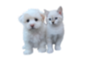 dog-and-cat-free-3484559__340.png