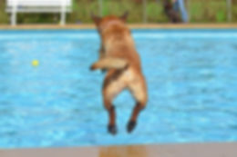 dog-665159__340.jpg