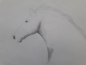 tête de cheval - étude au crayon