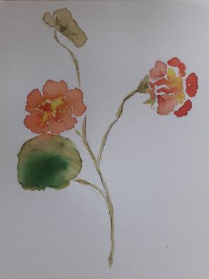 Fleur, encre colorée