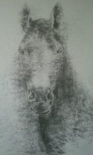 cheval de face au fusain
