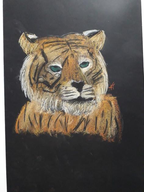tigre , crayon pastel