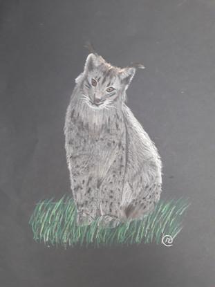 lynx crayon pastel