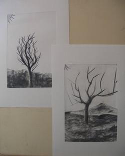 arbres d'hiver