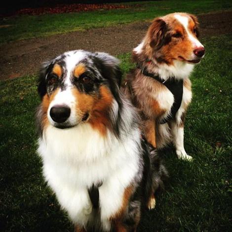 Luna & Joey