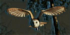 Owl_Free_7.jpg