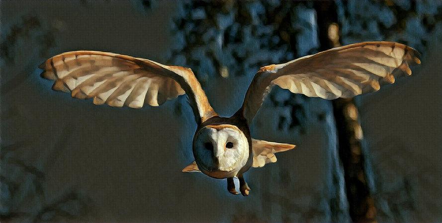 Birds Eye Alternative Aerial Drone Photography & 3D Virtual Tours