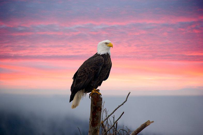 EagleintheMist.jpg