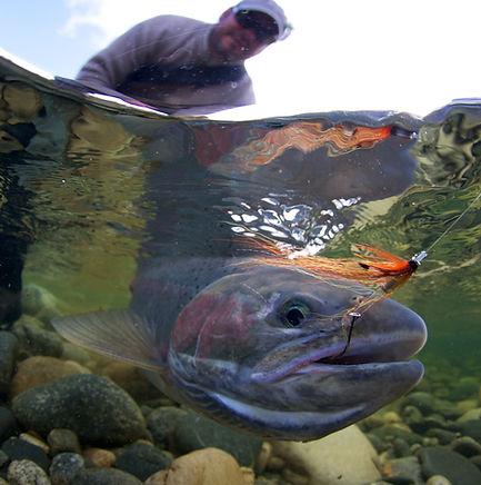 SL-spring-underwater-1.jpg