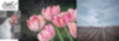 Hdr-paintings.jpg