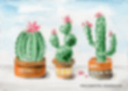 Cactus3Pots-AnieTroeWeb.jpg