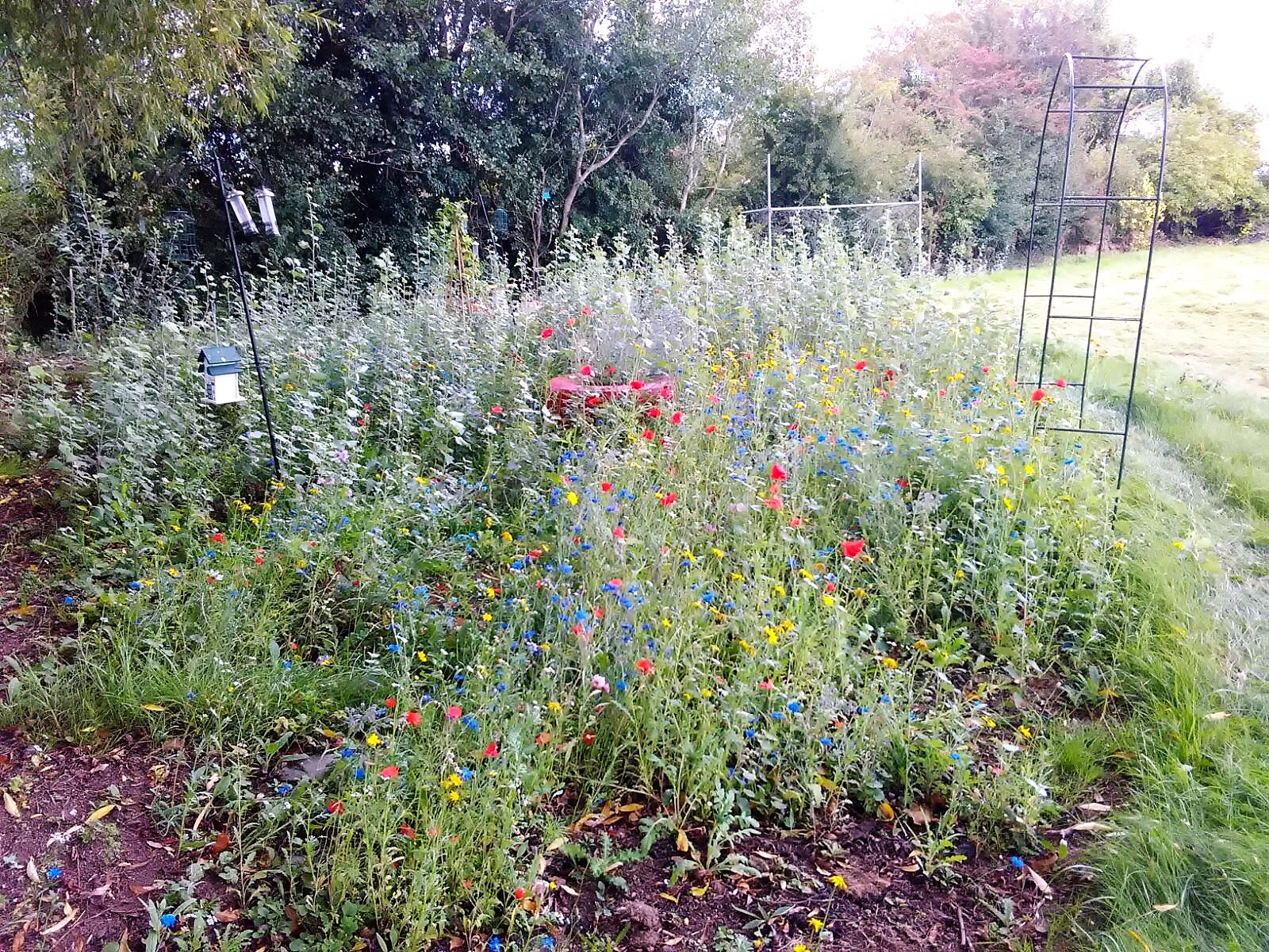 Wildflower Garden in flower