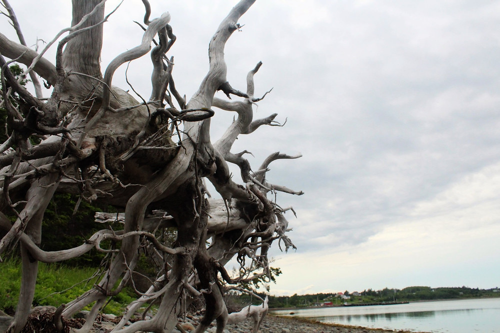 driftwood on gull island