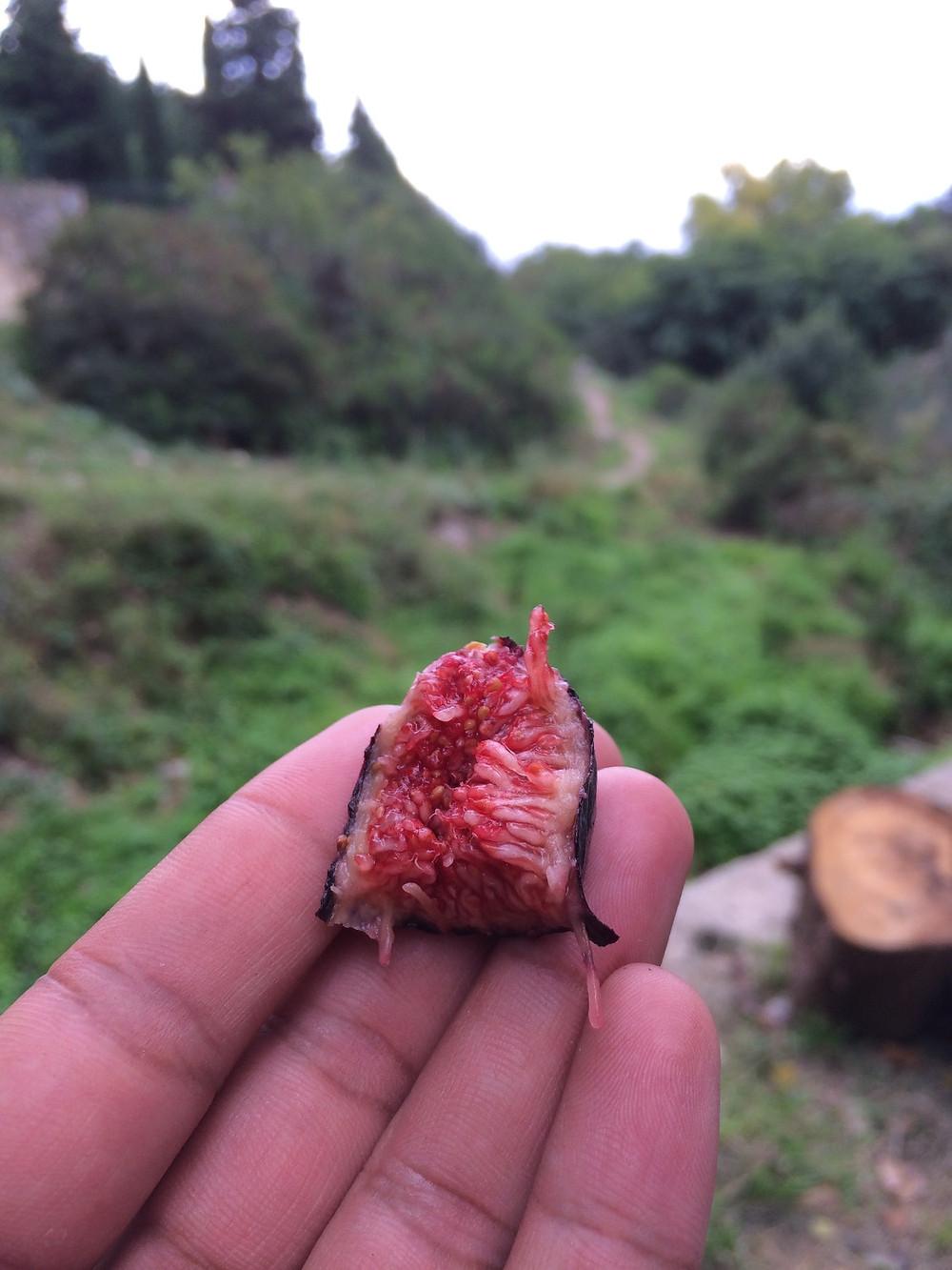 figs in liguria