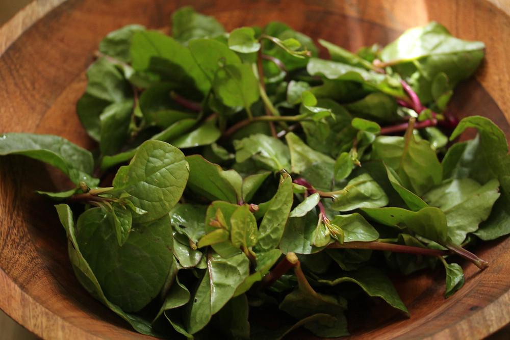 malabar spinach or basale soppu