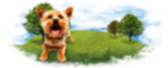Dog in field.png