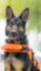 Search_and_Rescue_Dogs_edited_edited.jpg
