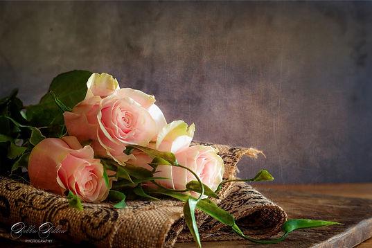 Rose Blush PS wm.jpg