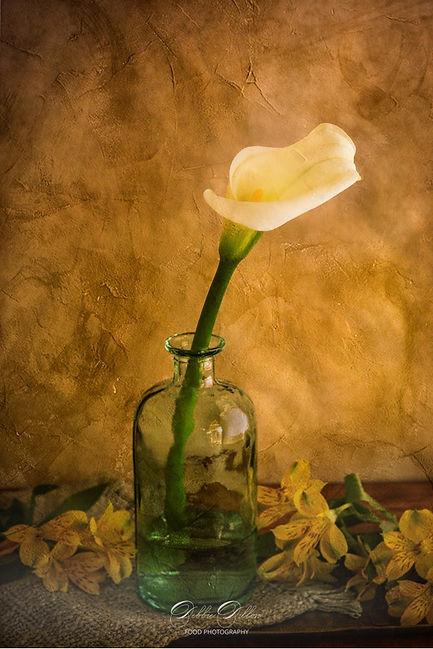 Cala lilly on texture PS wm.jpg