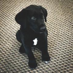 Model Pup