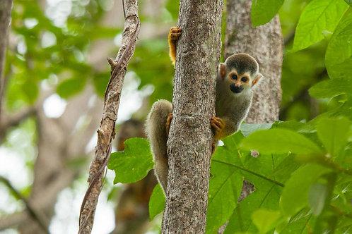 Monkey Around Costa Rica