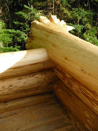 Cedar Round Notch