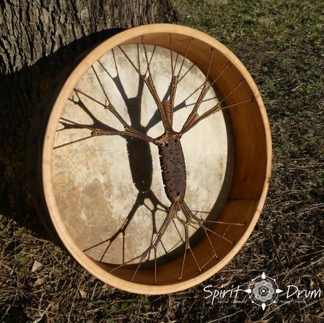 banksia moth drum.jpg