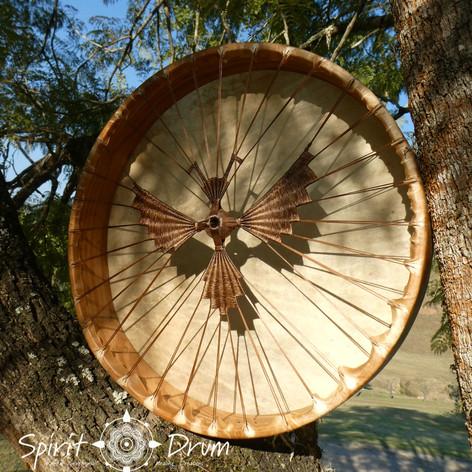 cicada drum back.jpg