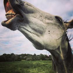 location shoot - horses