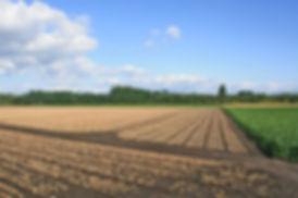 memuro_farm1.jpg