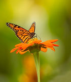 3_Butterflies-22-Edit.jpg
