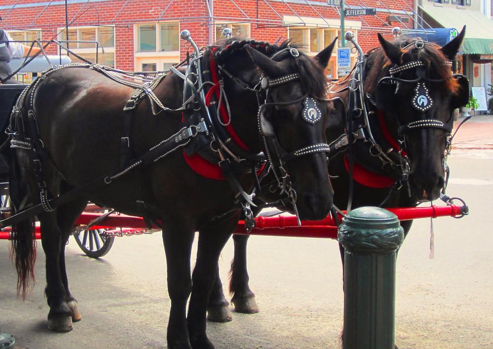 Horses city market savannah
