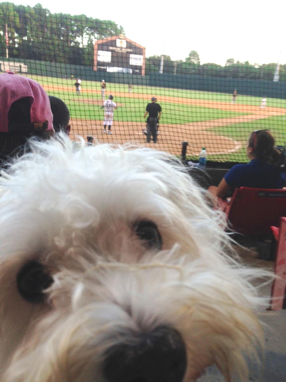 dog at baseball game