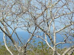 ocean-view-lot-guanacaste15.JPG