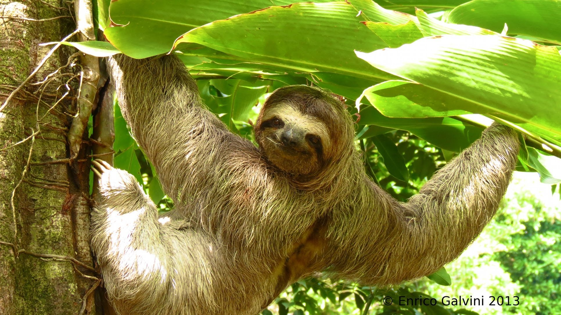 sloth costa rica real estate.jpg
