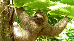 sloth costa rica real estate.jpg