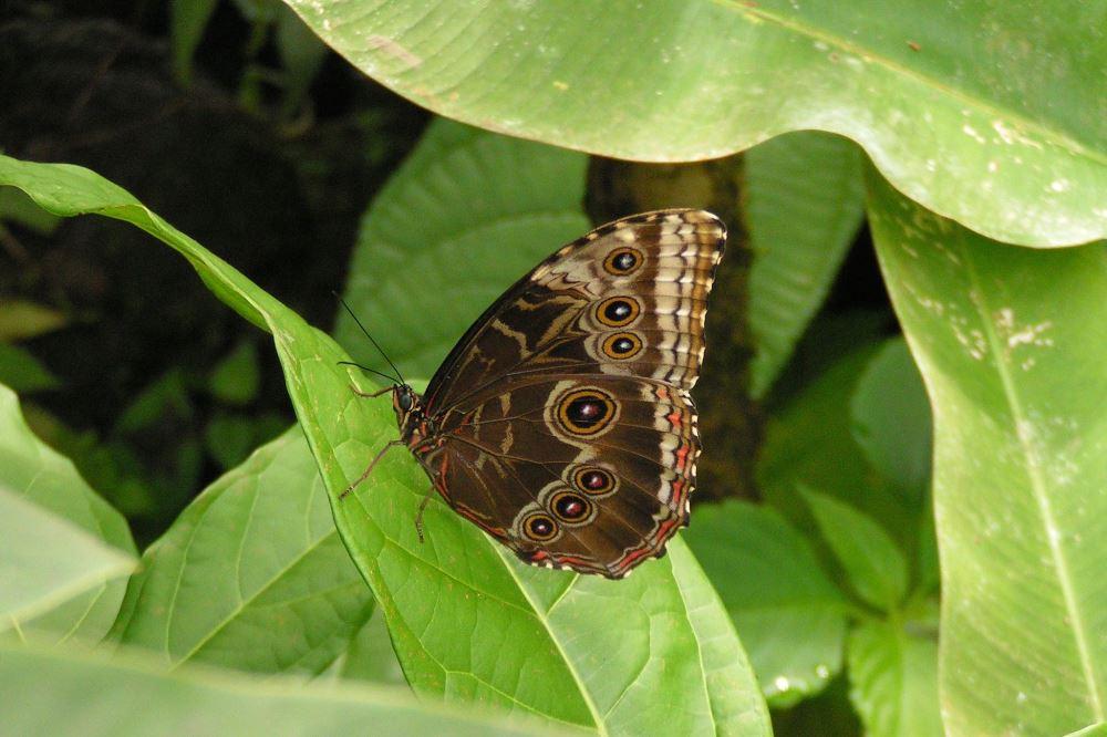 952 Tarcoles Costa Rica 191.jpg