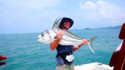 roosterfish in quepos