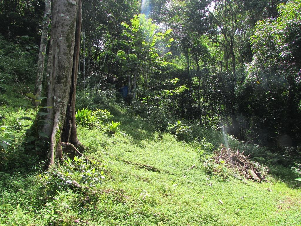 945 Dominical Ocean View099.JPG
