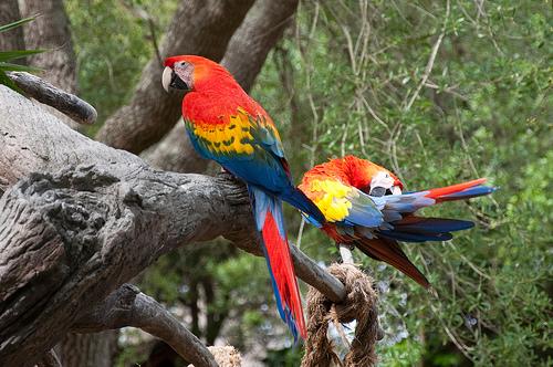 macaws.jpg