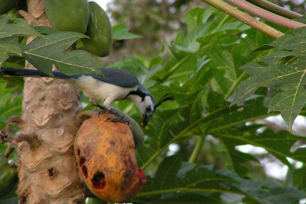 952 Tarcoles Costa Rica 193.jpg