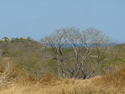 ocean-view-lot-guanacaste13.JPG