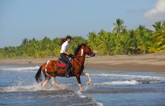 horses-carefully-train.jpg