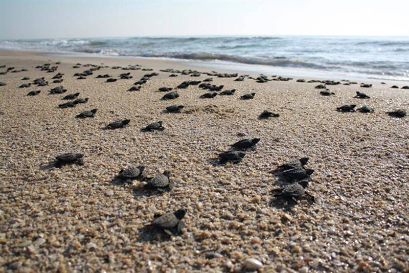 costa-rica-turtles.jpg